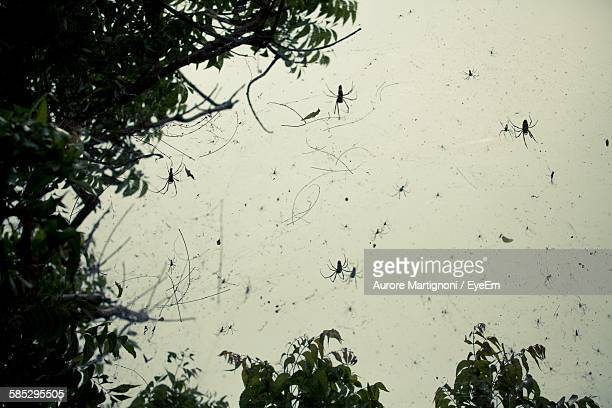 Low Angle View Of Spiders On Web By Tree Against Sky