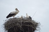 Low Angle View Of Storks In Nest Against Clear Sky