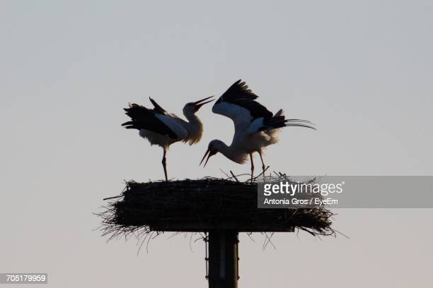 Low Angle View Of Storks