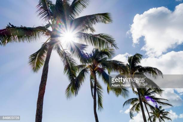 Low angle view of sun shining through palm trees