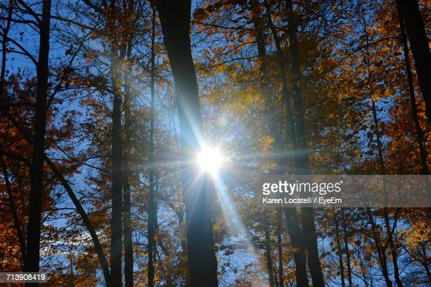 Low Angle View Of Sun Streaming Through Trees Against Sky