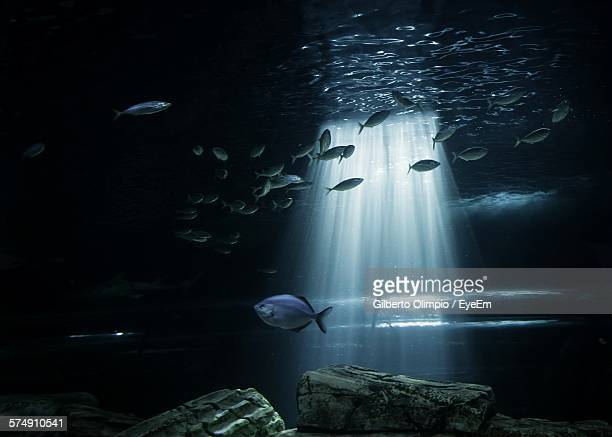 Low Angle View Of Sunbeam Streaming Through Water In Aquarium