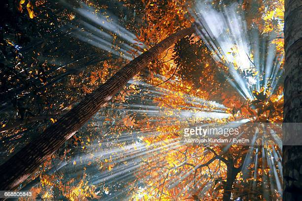 Low Angle View Of Sunbeams Passing Through Tree
