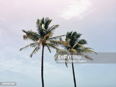 Low Angle View Of Tall Coconut Palm Tree Against Sky