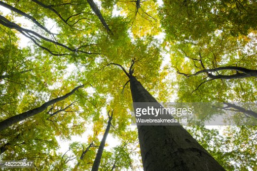 Low angle view of tall trees : Foto de stock