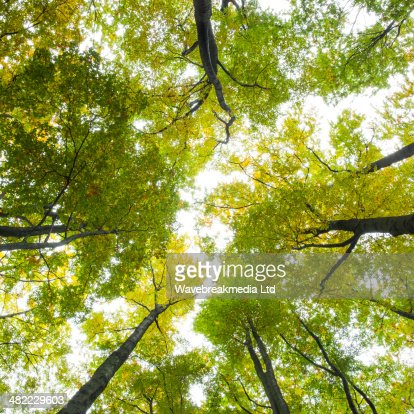 Low angle view of tall trees : Stock Photo