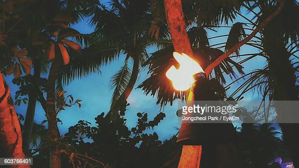 Low Angle View Of Tiki Torch At Night