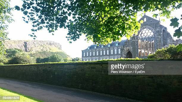 Low Angle View Of Tree And Holyrood Abbey
