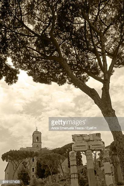 Low Angle View Of Tree By Capitoline Hill Against Sky