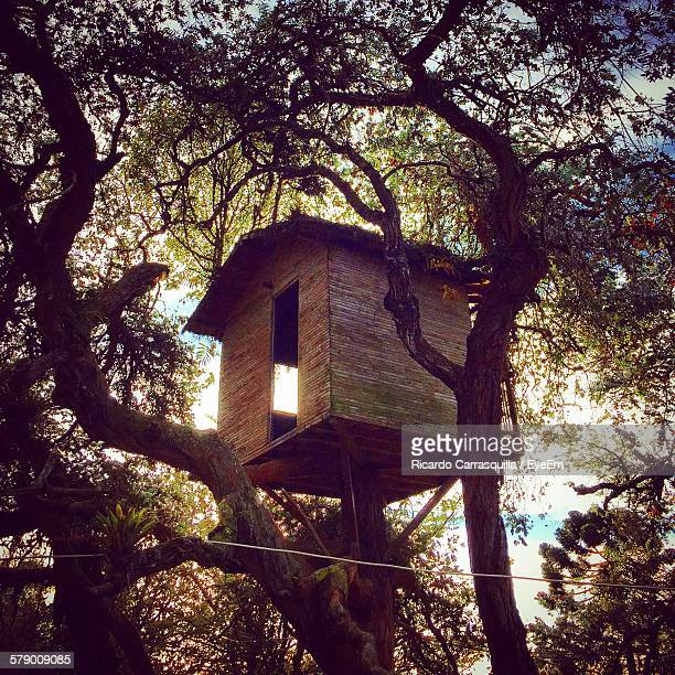 Low Angle View Of Tree House
