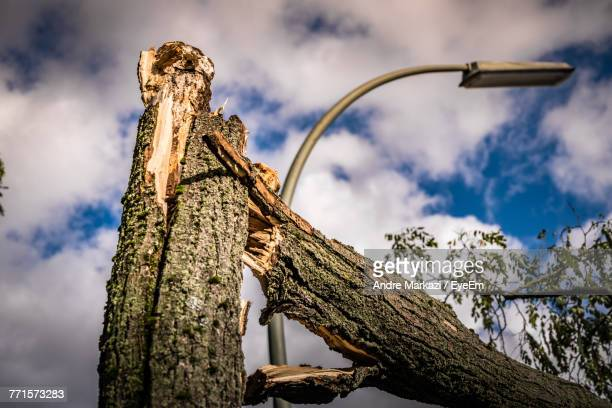 Low Angle View Of Tree Trunk Against Cloudy Sky