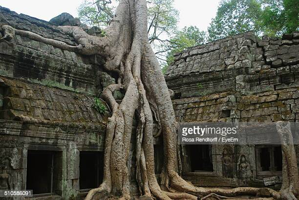 Low angle view of tree trunk against ruined structure