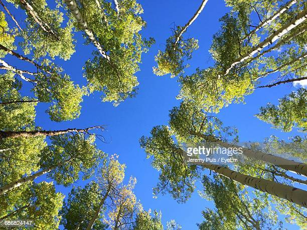 Low Angle View Of Trees Against Blue Sky