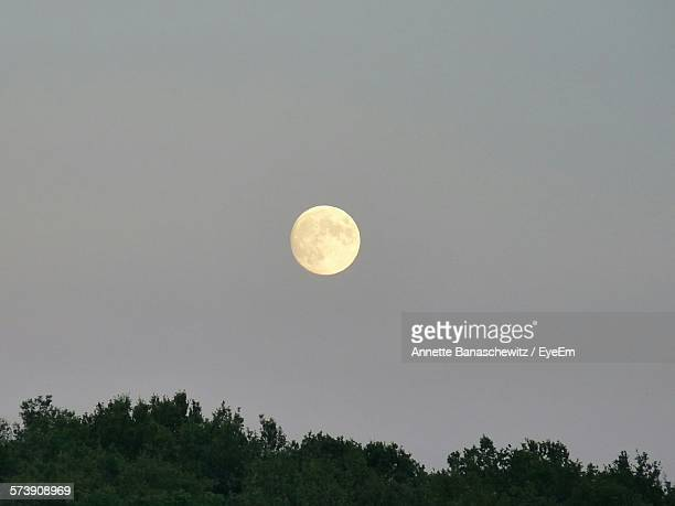 Low Angle View Of Trees Against Full Moon In Clear Sky