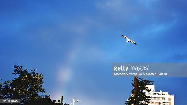 Low Angle View Of Trees And Buildings Against Seagull Flying In Blue Sky