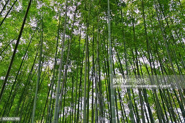 Low Angle View Of Trees Growing At Forest