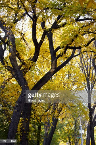 Low angle view of trees in a park, Central Park, Manhattan, New York City, New York State, USA : Stock Photo