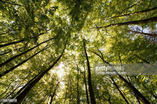 Low Angle View Of Trees In Forest