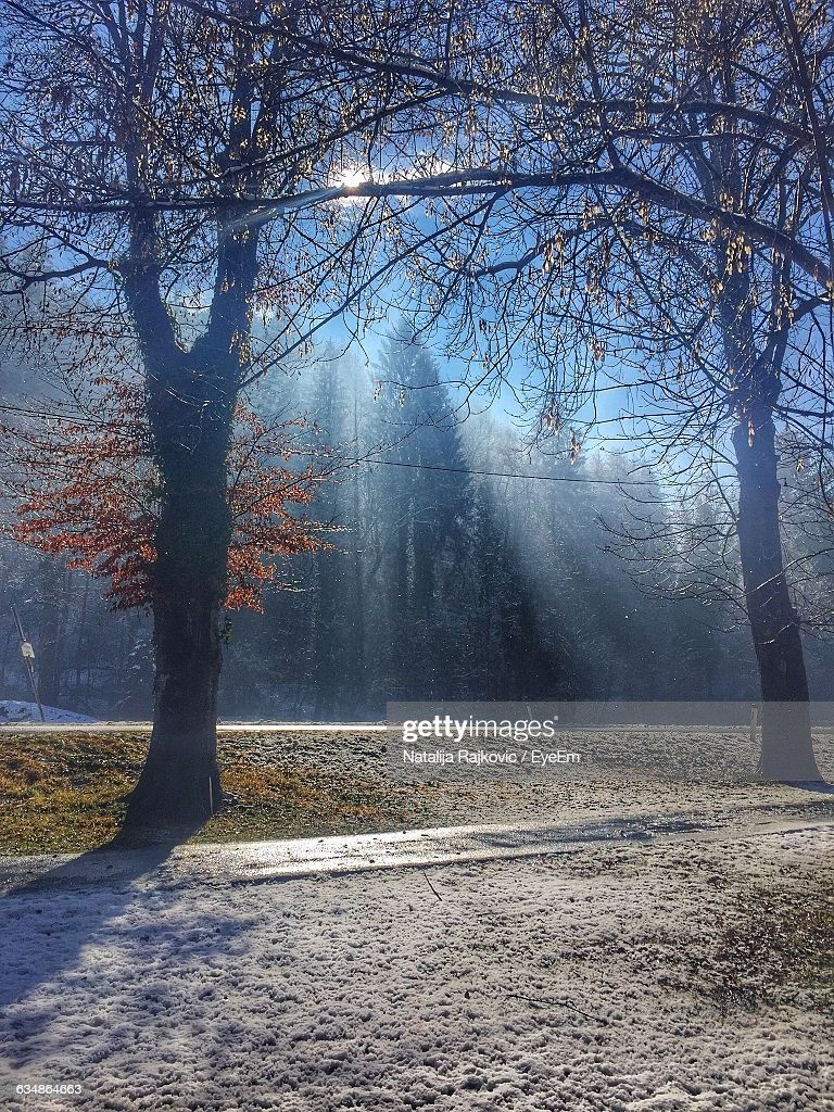 Low Angle View Of Trees On Sunny Day During Winter