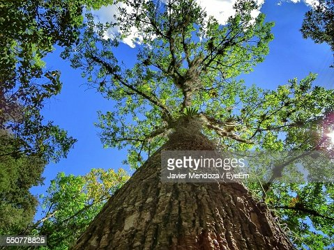 Low Angle View Of Treetop Against Sky