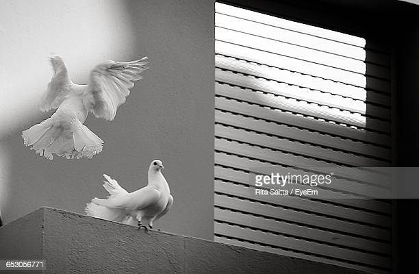 Low Angle View Of Two Doves