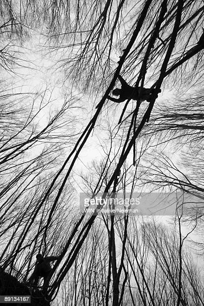 Low angle view of two men climbing trees, Nivki Park, Kiev, Ukraine