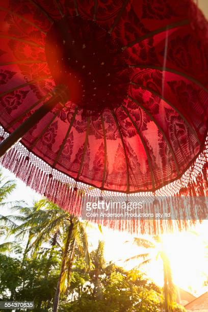 Low angle view of umbrella under palm trees