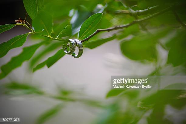 Low Angle View Of Wedding Rings On Tree Branch