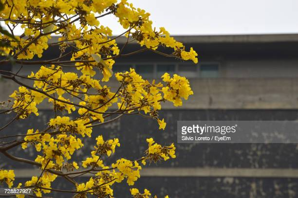 Low Angle View Of Yellow Tree Against Sky