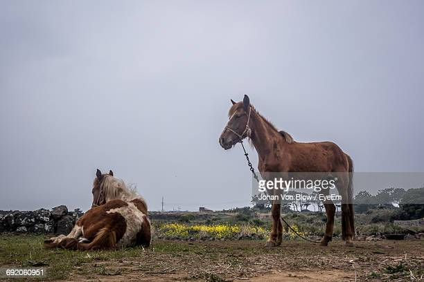 Low Angle View Ov Two Horses On Field Against Sky