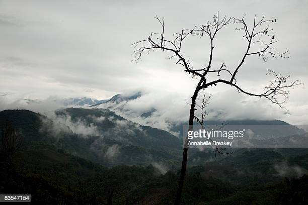 Low clouds in the foothills of the Himalyas