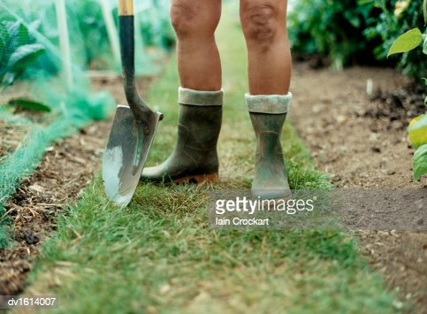 Low Section of a Mans Bare Legs in Wellington Boots, With a Shovel Standing in a Garden : Stock Photo