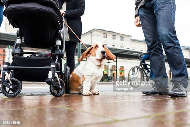 Low section of family with Basset Hound on sidewalk