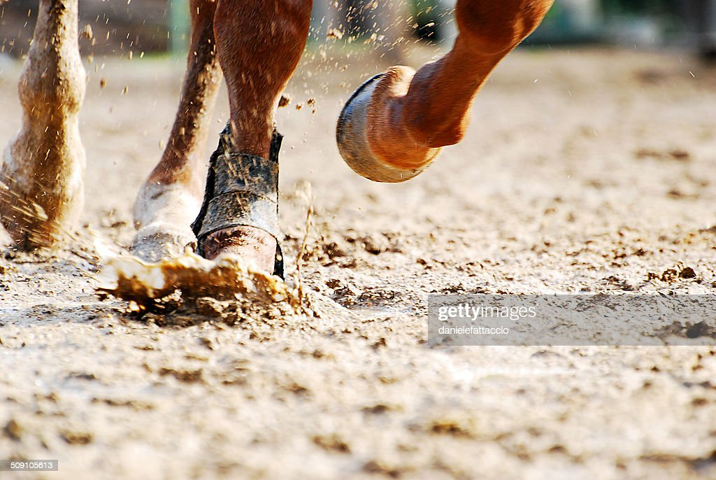 Low section of horse running