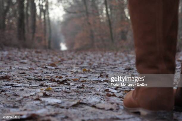 Low Section Of Man Standing In Forest During Autumn