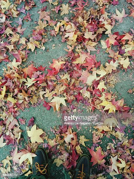 Low Section Of Man Standing On Street Covered With Dry Autumn Leaves