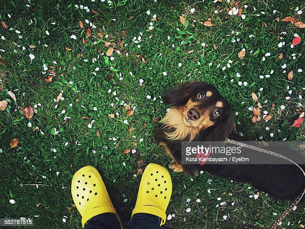 Low Section Of Man Standing With Dachshund On Grassy Field In Park