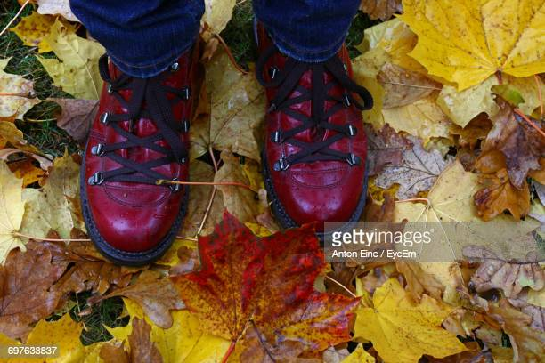 Low Section Of Man Wearing Boots While Standing On Fallen Maple Leaves During Autumn