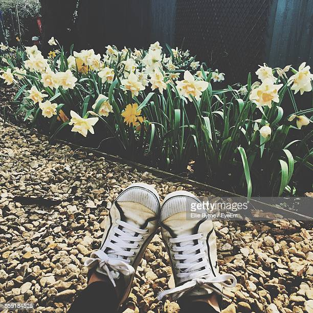 Low Section Of Man Wearing Canvas Shoe With White Daffodil Flowers In Park
