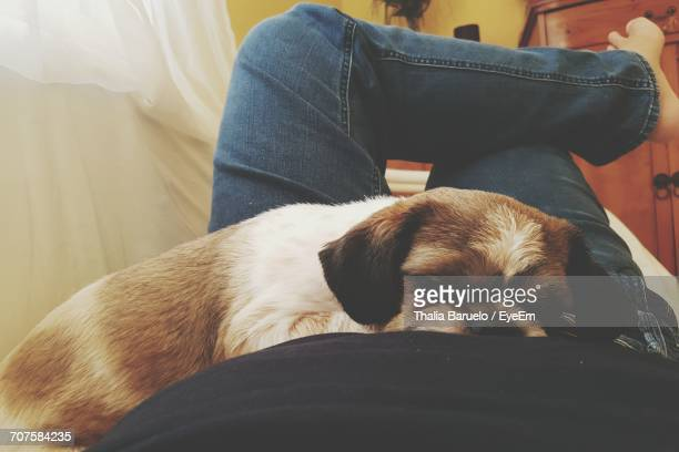 Low Section Of Man With Dog Relaxing At Home