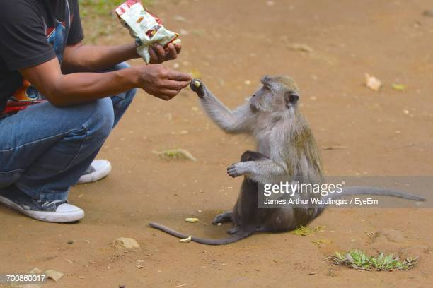 Low Section Of Person Feeding Monkey