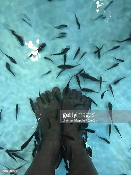 Low Section Of Person Having Fish Pedicure