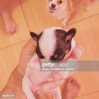 Low Section Of Person Holding Puppy