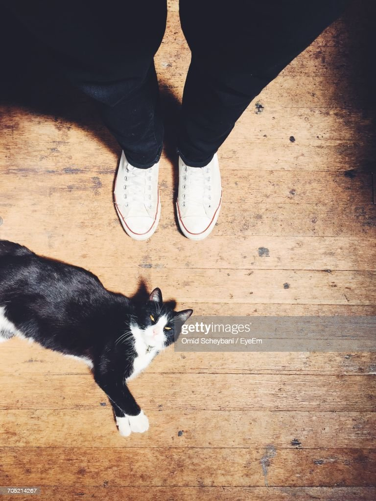 Low Section Of Person Standing By Cat Resting On Hardwood Floor