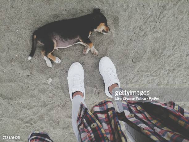 Low Section Of Person Standing By Dog On Sand