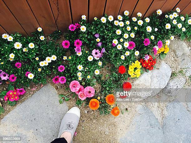 Low Section Of Person Standing By Multi Colored Flowers In Yard
