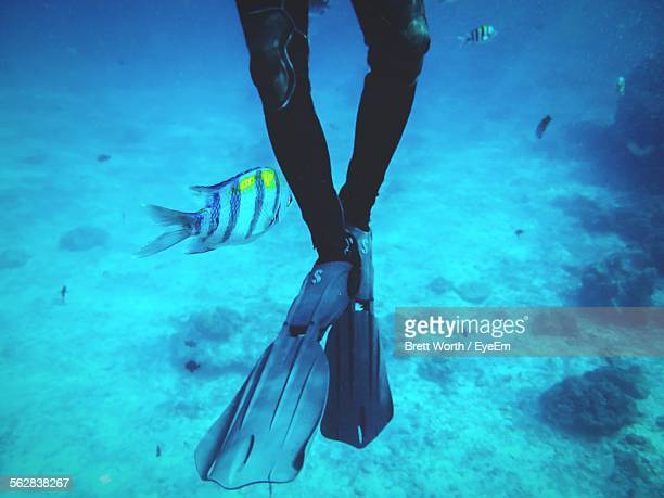 Low Section Of Scuba Diver Swimming Up Off Seabed
