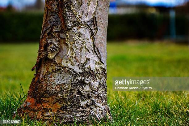 Low Section Of Tree Trunk On Grassland
