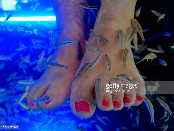 Low Section Of Woman Getting Fish Pedicure