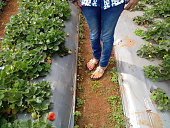 Low Section Of Woman Standing At Strawberry Farm